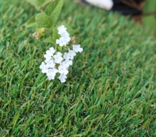 artificial-grass-petgrass-55-1392